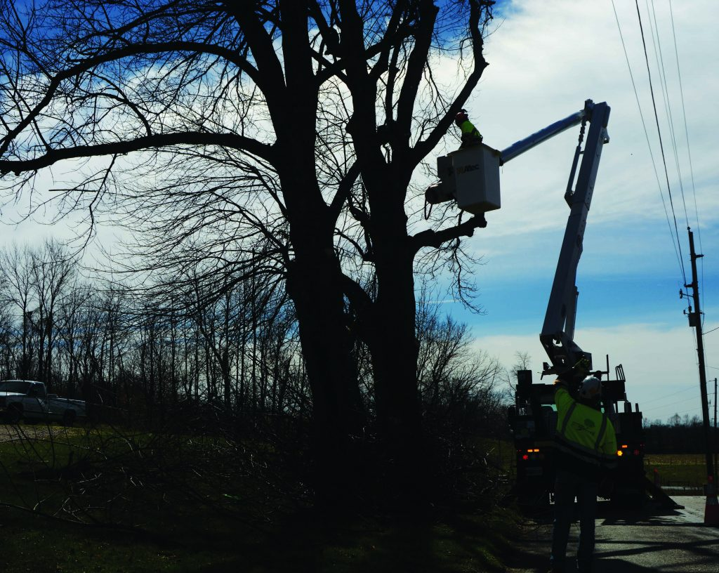 Photo of tree trimming