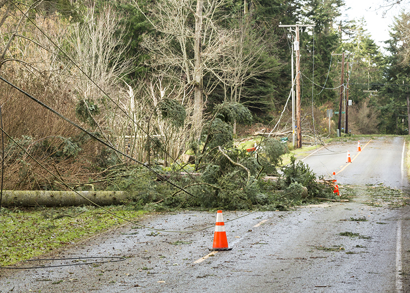 Downed tree in a power line