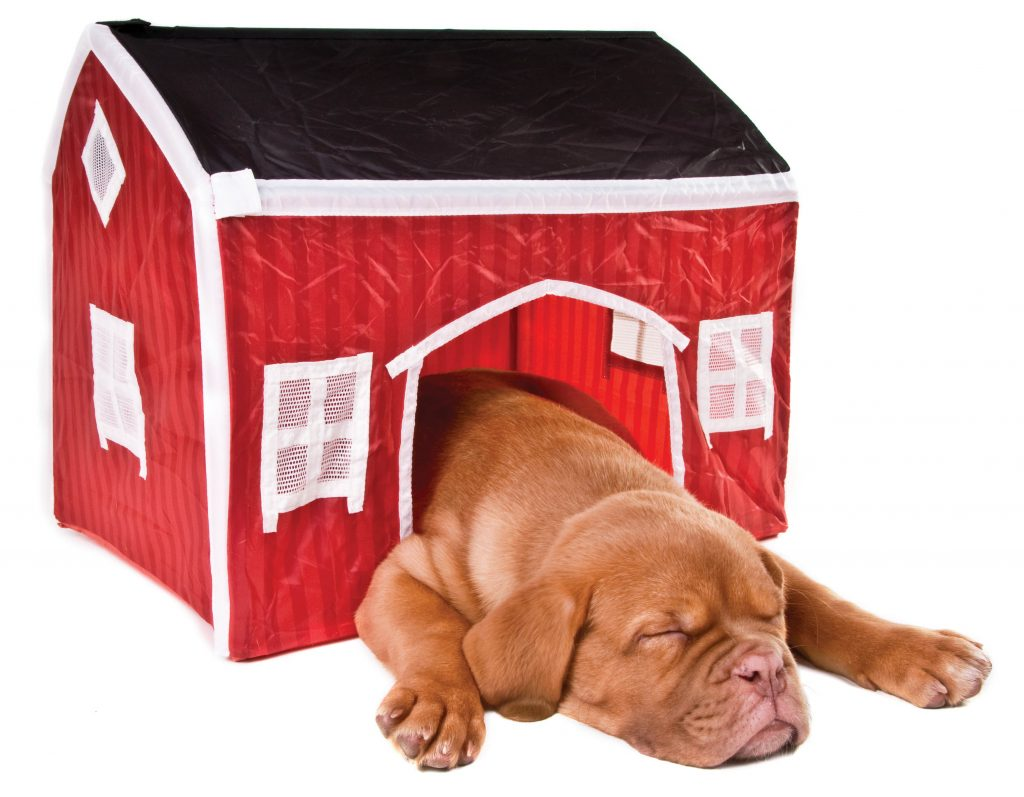 Picture of puppy in a dog house