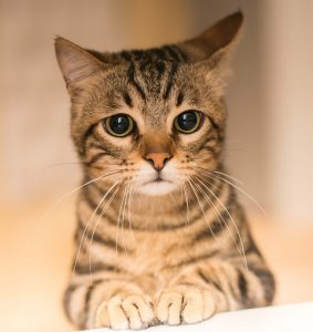 Photo of cat