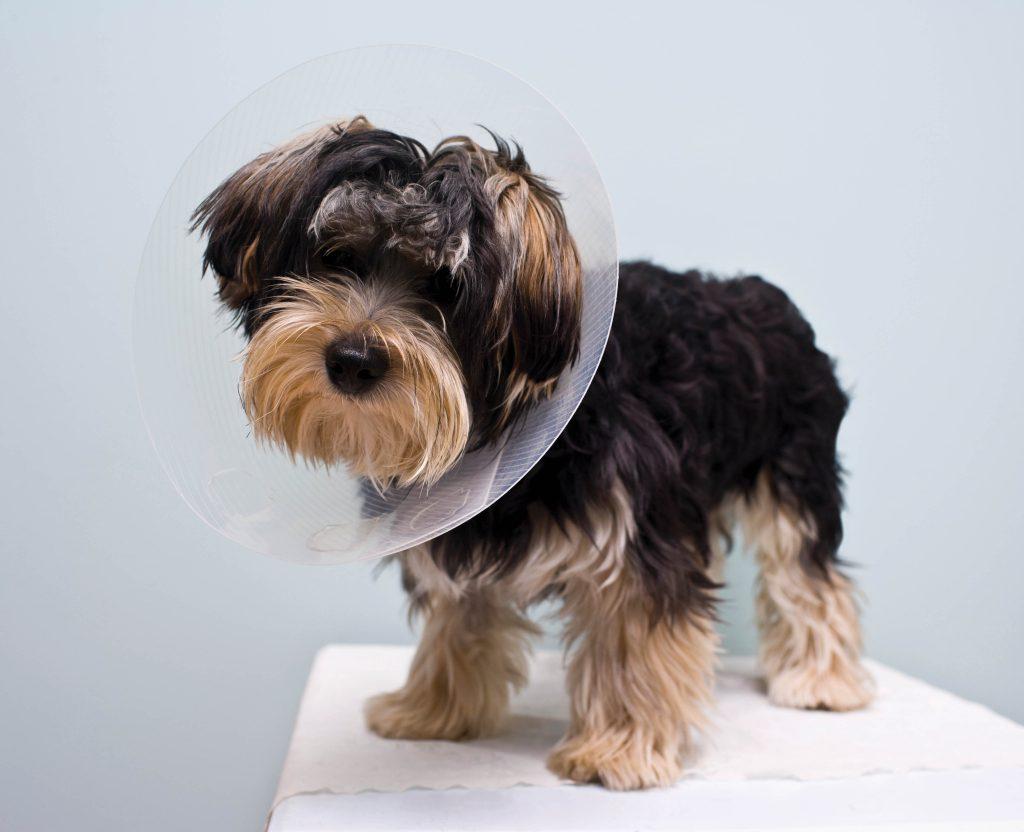 Photo of dog with cone around neck