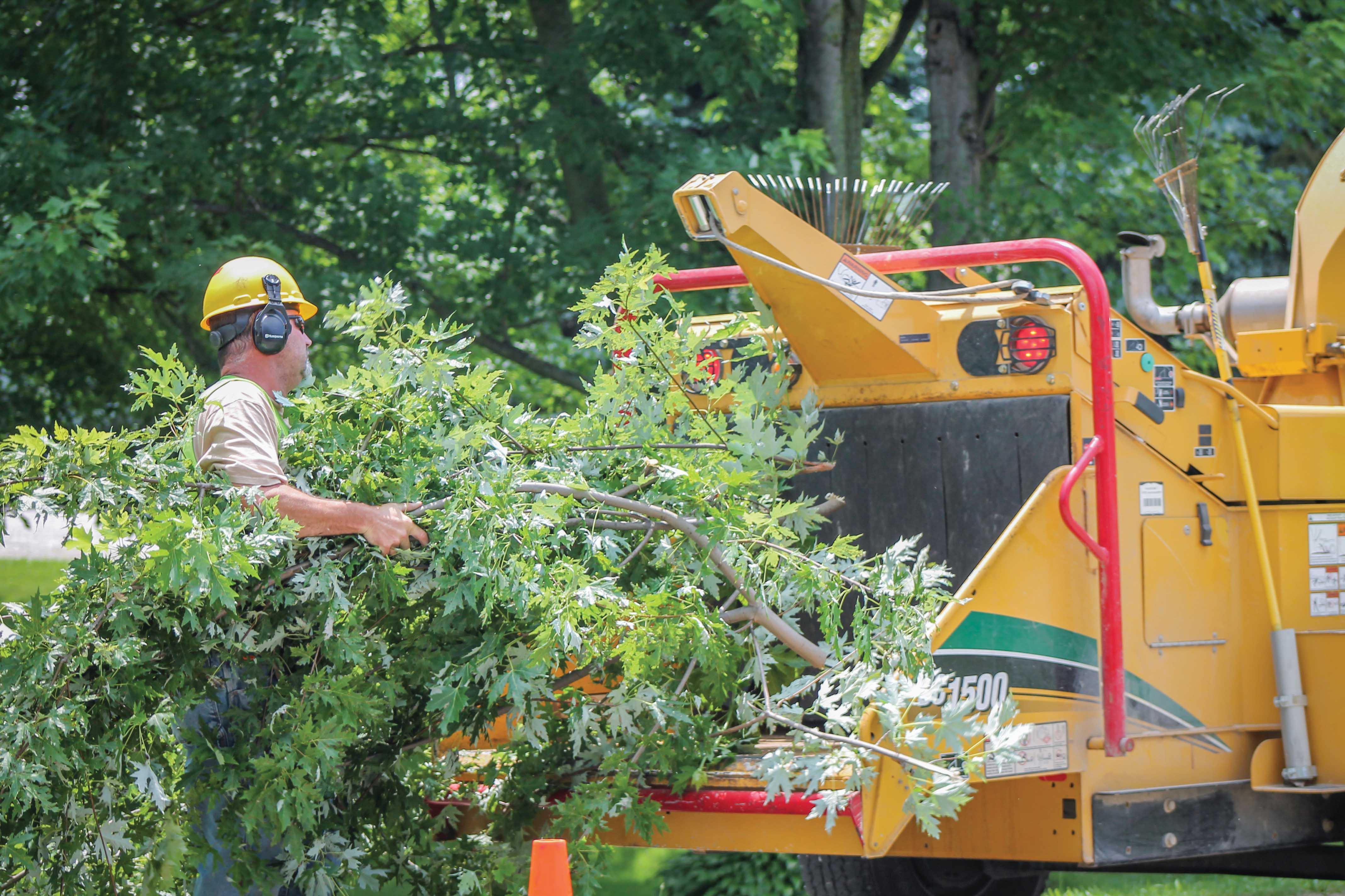 Tree trimming crew