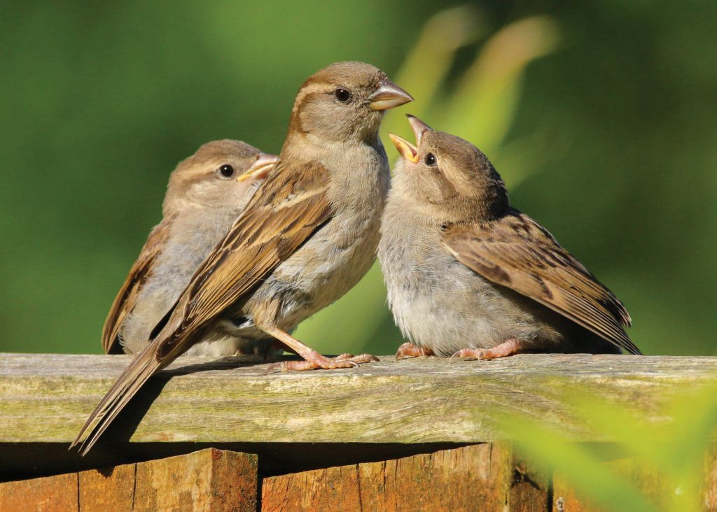 Photo of sparrows