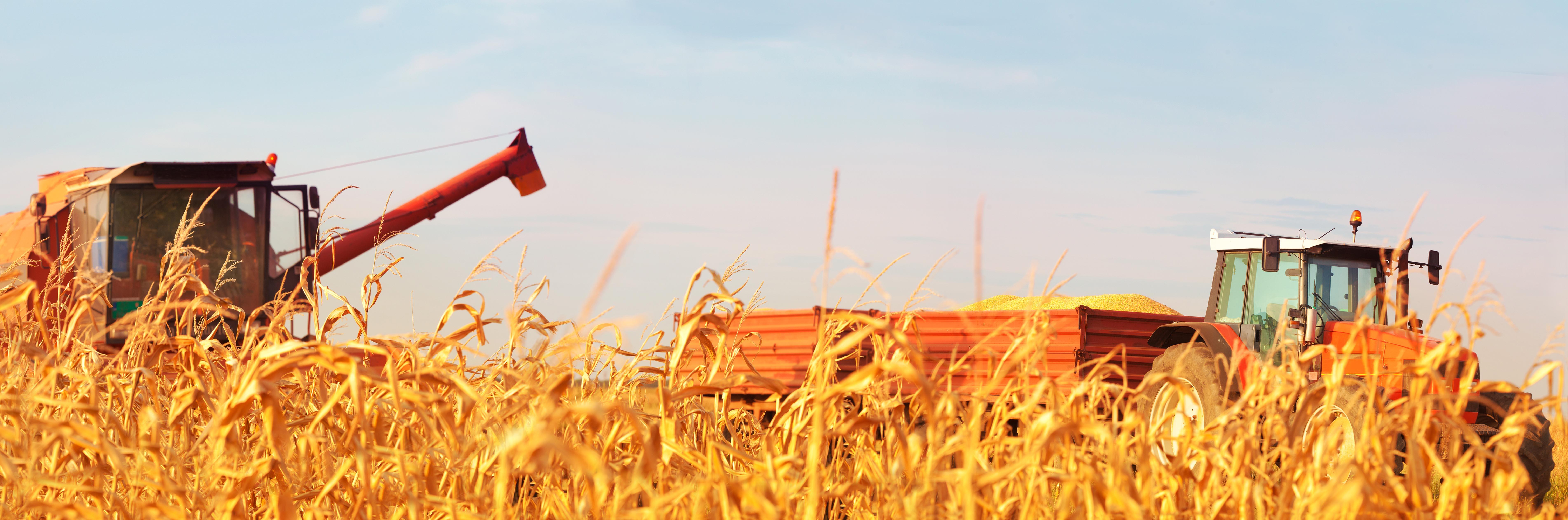 Farm harvest photo