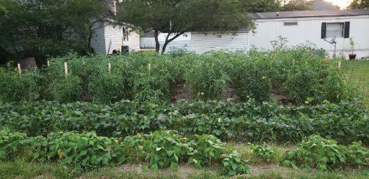 Wiley's garden