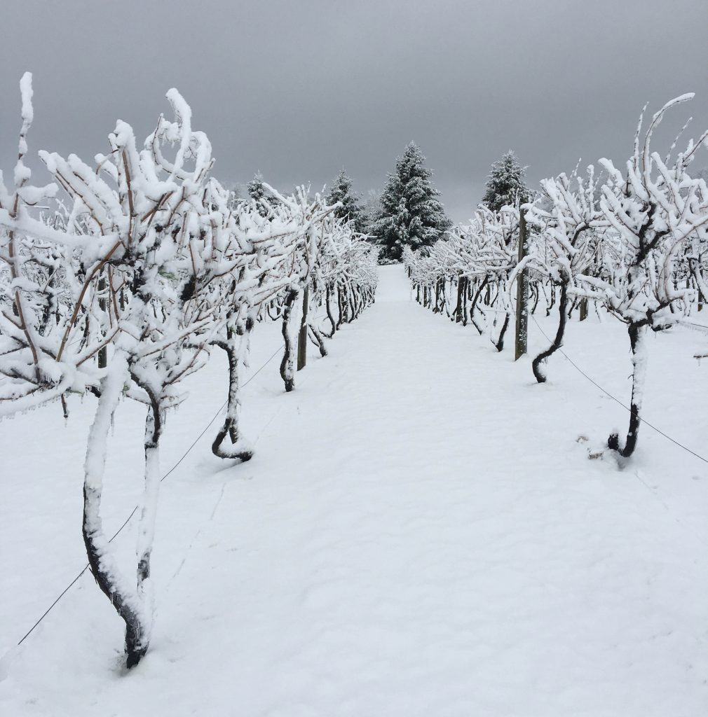 Nob Hill Vineyard