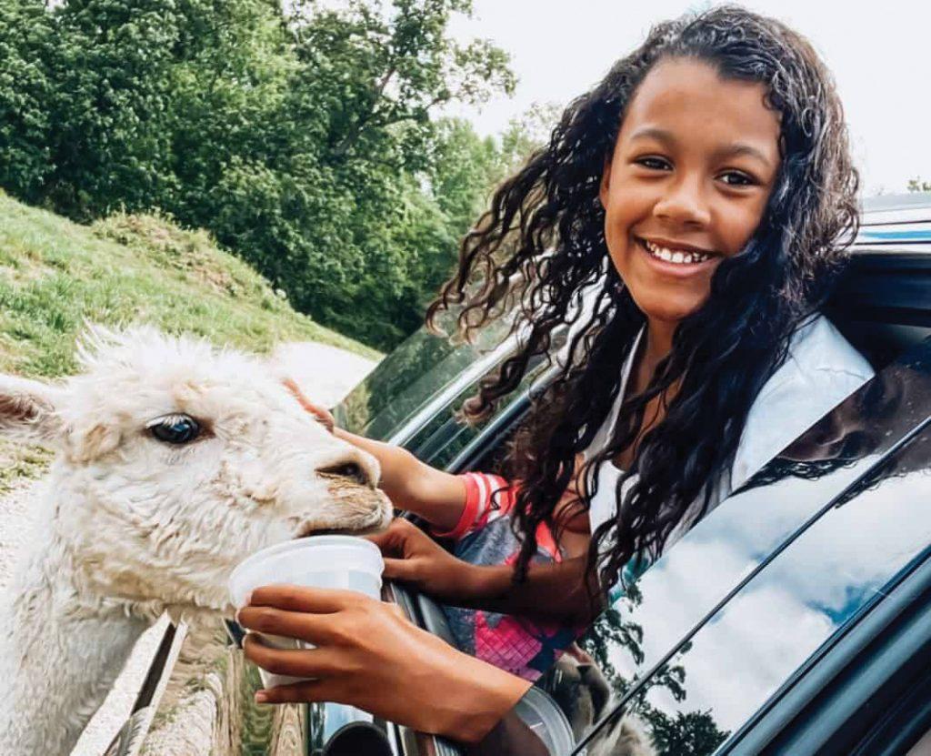 Girl feeding an animal in car