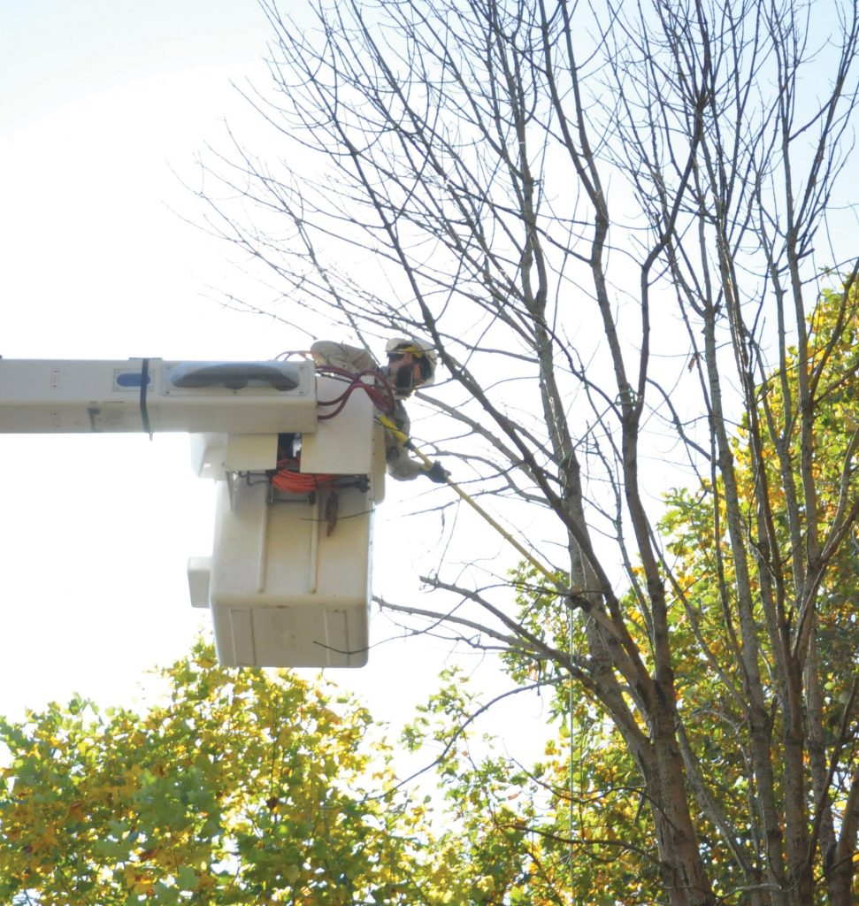 Crew worker doing tree trimming